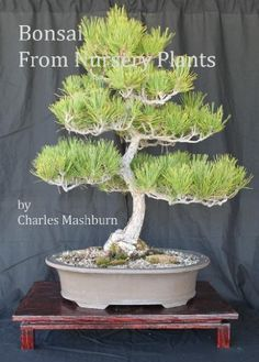 Bonsai From Nursery Plants