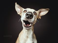 "Did somebody say ""cheese""? - Licensing and print requests: info@elkevogelsang.com"