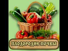 Посев сидератов после картофеля. Как повысить плодородие почвы на дачном...