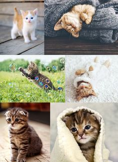 25 Adorable Kittens Stock Photos To Make You Happy