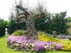 aiuola con ulivo e fiori