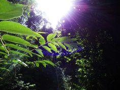 #forest #himachal hills #leaves #lens flare #light #sunny #warm