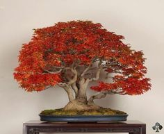 """""""The object is not to make the tree look like a bonsai, but to make the bonsai look like a tree."""" - John Naka"""