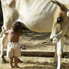 Ag & Cattle