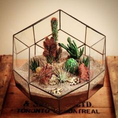 Planted geometric terrarium environment. Succulent and cactus planter from Nightshade Studio. Canadian handmade.
