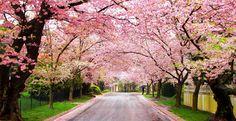 14 x de mooiste bloementunnels over de hele wereld