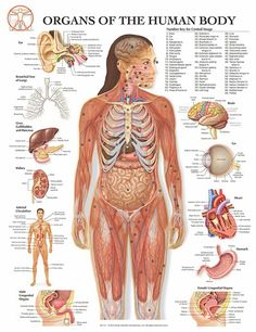 Anatomy Of The Human Body is an amazing structure made up of many fascinating parts and systems. There are 78 organs in the human body.I...