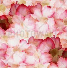 Desert Rose Petals - Wall Mural & Photo Wallpaper - Photowall