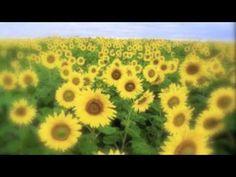 Volver a Ser Feliz (Facundo Cabral) - YouTube