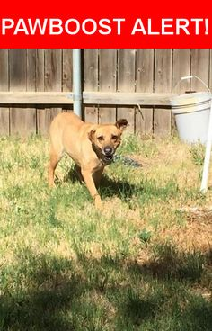 Is this your lost pet? Found in Lubbock, TX 79410. Please spread the word so we can find the owner!  Tan dog, chain collar. Very scared and skiddish. I believe dog is female. She is in the fenced backyard of two college students at 3407 24th who said they would try and keep her to post info.  Nearest Address: Near 24th St & Indiana