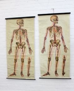St+Johns+Ambulance+Anatomical+Chart+Of+The+Human+Skeleton+Circa+1930