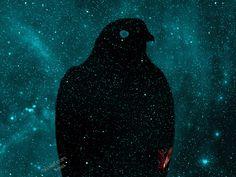 Hawkeye Stellar Object - Sharp-shinned hawk photo art by Rybird http://rybird.com/hawks.html