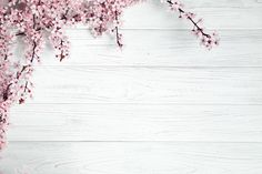 White wood backdrop with plum flower Flower Background Wallpaper, Wood Background, Flower Backgrounds, Textured Background, Spring Backgrounds, Laptop Wallpaper, White Wallpaper, Wallpaper Pc, Wallpaper Backgrounds