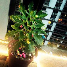 A árvore de Natal aqui de casa é de humanas ✌️ #miçanga