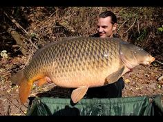 Massive common