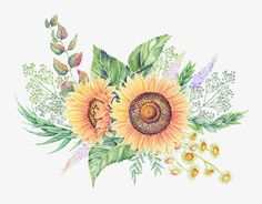 Hand-painted watercolor flower illustration