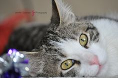 Pet Photography - Cat - Rosemount Minnesota Photographer - Jennifer Swanson Photography