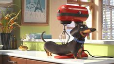 """Brinquedos inspirados no filme Pets – A Vida Secreta dos Bichos - """" The Effective Pictures We Offer You About trends memes A quality picture can tell you many thi - Pet Trailer, Movie Trailers, Pets Movie, Ways To Be Happier, Kino Film, Cinema, Secret Life Of Pets, Dachshund Love, Daschund"""
