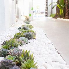Succulents are the perfect addition to outdoor walkways! #LandscapingandOutdoorSpaces