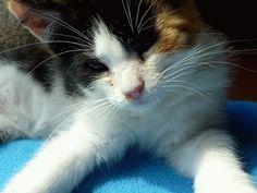 Habl Katzen - Cats finest: Bilderalbum Muesli