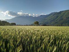 Il sole, il grano, il vento. I colori della Valle di Susa  #myValsusa 15.05.16 #fotodelgiorno di Enzo Gioberto