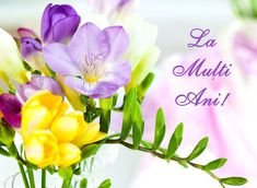 bunch of colorful freesia flowers by sarsmis, via Shutterstock