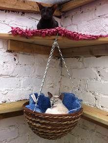 outdoor hanging cat baskets #CatGirl