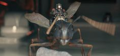 """Ant-thony was a carpenter ant and the loyal steed of Ant-Man. Named """" by Hank Pym, the ant who would later be named Ant-thony, was mounted with a camera by Pym to spy on Scott Lang as he stole the Ant-Man Suit from the Pym Residence. Dc Comic Books, Comic Book Heroes, Ant Man 2015, Adventure Film, 2015 Movies, Man Photo, Marvel Dc Comics, Marvel Movies, Marvel Cinematic Universe"""