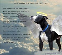 ♥A dog's prayer for a grieving human