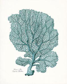 Antique Teal Sea Coral Illustration  Coastal by vintagebytheshore, $15.00