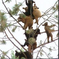 Bears bears bears.