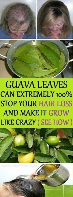 Hair – Guava leaves are a great remedy for hair loss. They contain vitamin B complex (pyridoxine, riboflavin, thiamine, pantothenic acid...