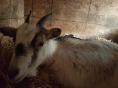 Mail - Judy Metcalf - Outlook Chicken Cat, Rabbits, Goats, Horses, Animals, Animales, Animaux, Bunnies, Rabbit
