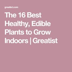 Indoor gardening sounds like but most of us have no idea where to start. We rounded up the best fruits, veggies, and herbs to grow first, so you can get the hang of it all and develop a green thumb. It's not as hard as you think, pinky-promise. Indoor Vegetable Gardening, Planting Vegetables, Urban Gardening, Veggies, Dwarf Avocado Tree, Growing Plants Indoors, Plant Lighting, Starting A Garden, Edible Plants