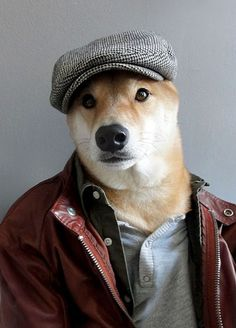 This Dog is So GQ