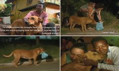 Extraordinary junkyard dog travels same dangerous four-mile route every night for three years to get food for her animal friends