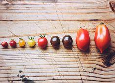 Shades of tomato