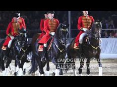 Finally the time has come again: Let the show begin! On October, 7th 2016 one of Northern Germany's biggest horse events will take place - the Verden Gala Show! The fascinating show covers a variety of acts, including highlights from current sport events. Do not miss the amazing show evening with our star guests. Presale has started! #hannoveranerverband #horseshow