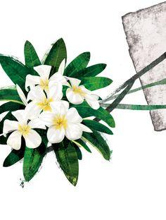 Floral fascination-Frangipani by *kenglye on deviantART