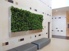 Green Wall at Baylor Cancer Center in Dallas, Texas.