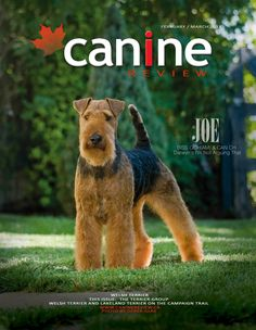 What's happening at Darwyn Welsh Terriers!: April 2011