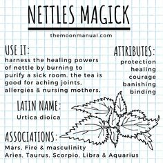 The Green Witch Diaries - Chamomile