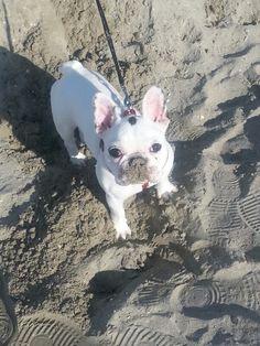 La mangiatrice d sabbia  ( pur d giocare...)