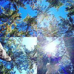 【neige_noirgenova】さんのInstagramをピンしています。 《太陽さんさ〜ん✨🌞☀️🌞☀️✨でグッドアフタヌーン🎶 Good afternoon! The sun is shining into the forest in the park.🌳☀️✨😃 What a beautiful day!! #久しぶりの快晴#いつもの公園に#お散歩#お目当のあの場所に#森林浴 と#日光浴#降り注ぐ太陽を存分に楽しみました#でも帰り風がちめたかったでし😵🤧😙#イタリアングレーハウンド#イタグレ#イタグレとの暮らし#週末#快晴#青空#公園#森#リラックス#今日もごきげん#italiangreyhound#italiangreyhoundsofinstagram#iggysofinstagram#piccololevrieroitaliano#bluesky#relax#park#leon#haveaniceday#ilovemydog》
