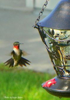 Feed the hummingbirds