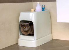 as a cat and small dog's call for a 21st century toilet, catolet's auto-washing uses sensors to detect when your pet has done the deed.