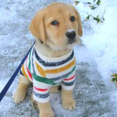 Adorable puppy in sweater