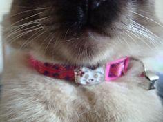 My cat Cheetah!