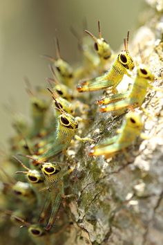 """Baby Hoppers 
