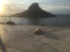 wonderful terrace and Kalymnos sunset Best Car Rental Deals, Real Estate Agency, Travel And Tourism, Greek Islands, Renting A House, Terrace, Villa, Vacation, Sunset